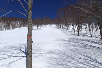 P3185072布引 尾根稜線 オレンジのテープが要所にあった.JPG